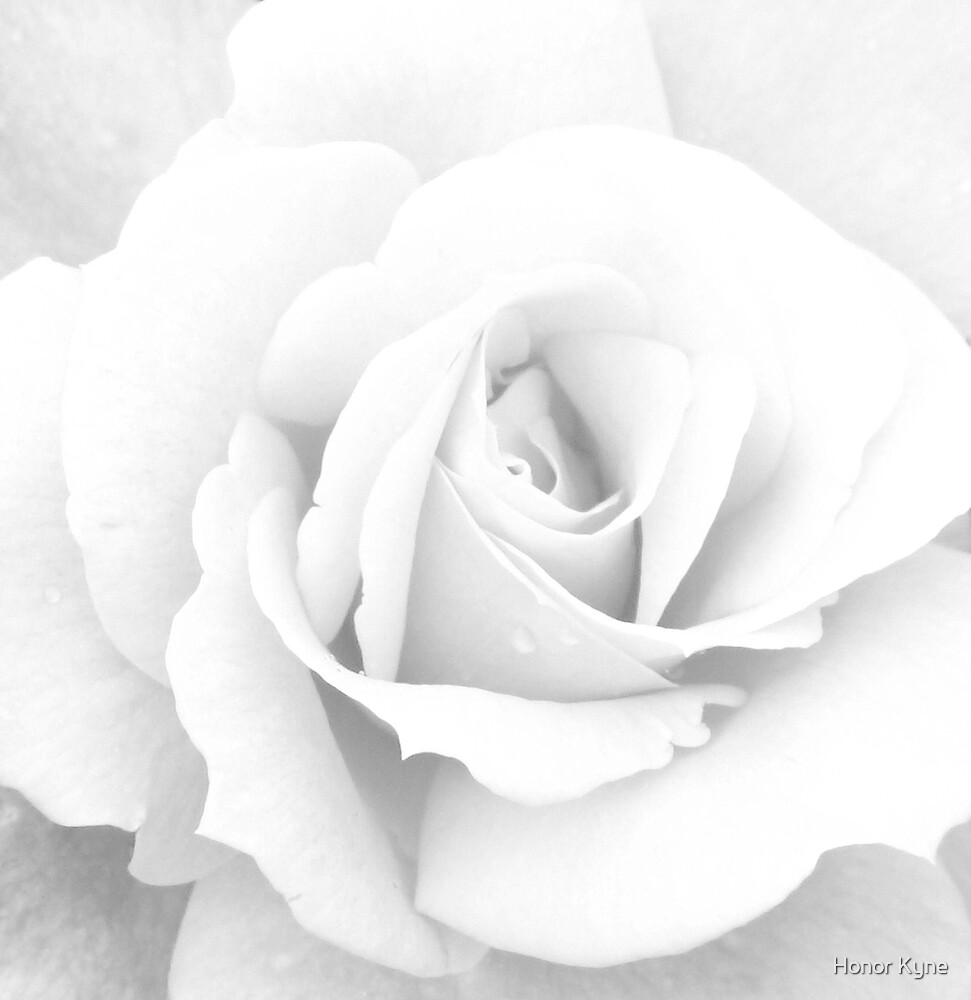 Heart of the Rose by Honor Kyne