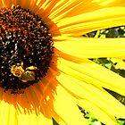 Sunny Bee by Jamie Tucker