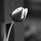 Tulip in B&W by DeeZ (D L Honeycutt)