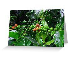 Costa Rica Highland Coffee, still green Greeting Card