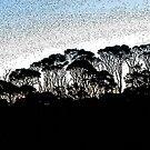 bush skyline by Bruce  Dickson