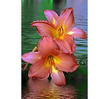 Pink Lillis in the water  Photographic Print