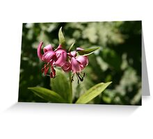 Martagon Lily Greeting Card