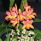 Orchid on Show by Heabar
