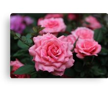 Pink Roses Canvas Print