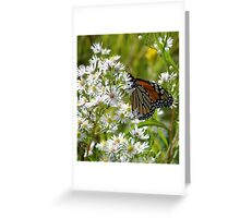 Monarch Feasting Greeting Card