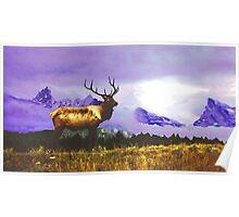 Elk- Jasper National Park, Canada Poster