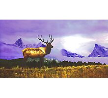 Elk- Jasper National Park, Canada Photographic Print