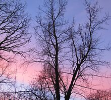 Vertical Purple and Pink Sunrise  by Adri Turner