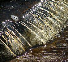 Golden Falls by pat oubridge