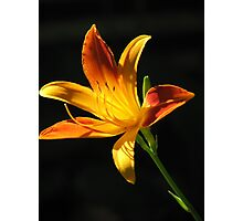 Sunny Day Lily Photographic Print