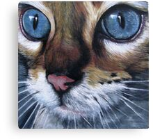 Blue eyed cat Canvas Print