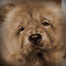 My Little Teddybear by smile4me
