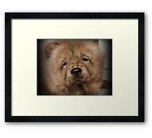 My Little Teddybear Framed Print