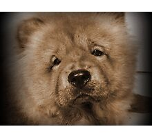 My Little Teddybear Photographic Print