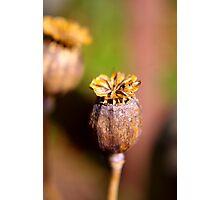 Seed Heads Photographic Print