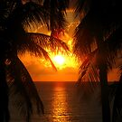 Palm Tree Silhouette, Sunset by Honor Kyne
