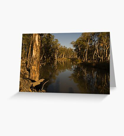Gum Trees Clinging Greeting Card