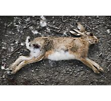 Dead Rabbit Photographic Print