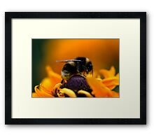 Buzz VII Framed Print