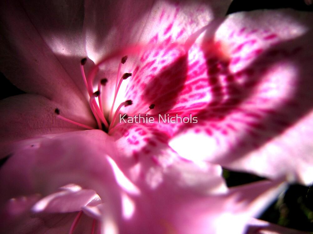 Pink Shadows by Kathie Nichols