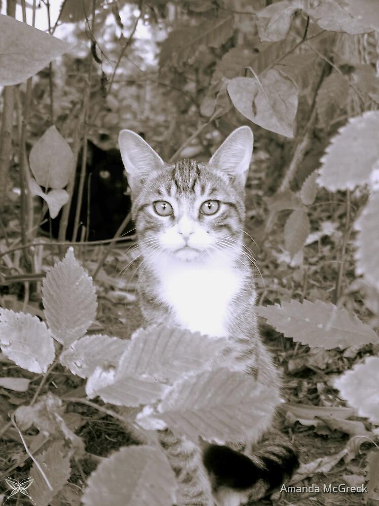 Kittens by Amanda McGreck