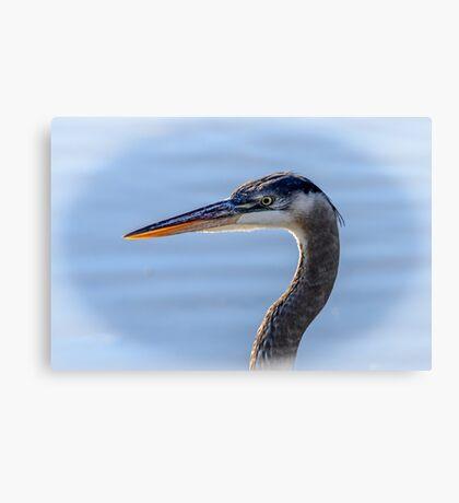 Great Blue Heron Portrait Canvas Print