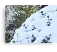 Life From Snow  Canvas Print