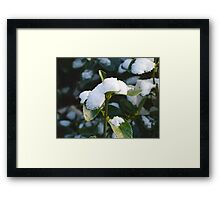 Life From Snow 2  Framed Print