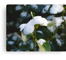 Life From Snow 2  Canvas Print