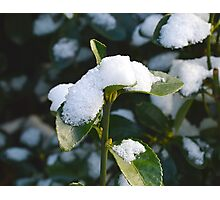 Life From Snow 2  Photographic Print