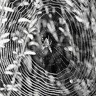 Spider and Web by Jonice