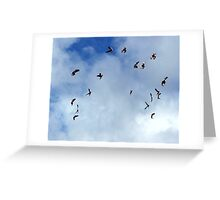 Galahs in Flight Greeting Card