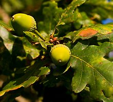 Acorns, Inistioge, County Kilkenny, Ireland by Andrew Jones