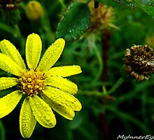 #504    Yellow Flower With Dew Drops by MyInnereyeMike