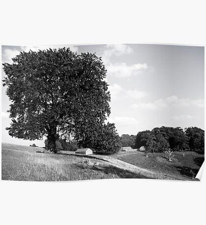 Dyrham Park - Landscape #2 Poster