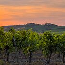 Sunset & Vine by antonywilliams
