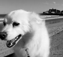 Sylvie the Wonder Dog Pauses at the Beach, in Black and White by Jack McCabe