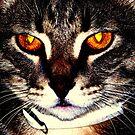 Kitty Art by Virginia N. Fred