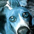 Blue Dogs by Dreamscenery