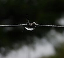 Beauty and Barbed Wire by iamelmana