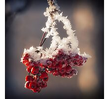 Berries in Ice Photographic Print