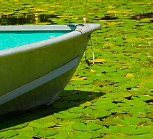 Floating on Lillies by myphototype