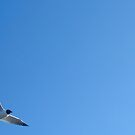 Flight by Patrick Czaplewski