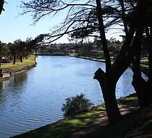 maribyrnong at the anglers by Steve Scully