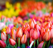Tulip Market by Jason Weigner