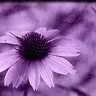 Purple Tye Dye by Thayessharumrn