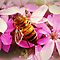 *AVATAR/Bee & Bloom - Enchanted Flowers*