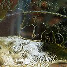 Metamorphosis by Marguerite Foxon