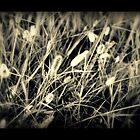 untold story by Tara Paulovits